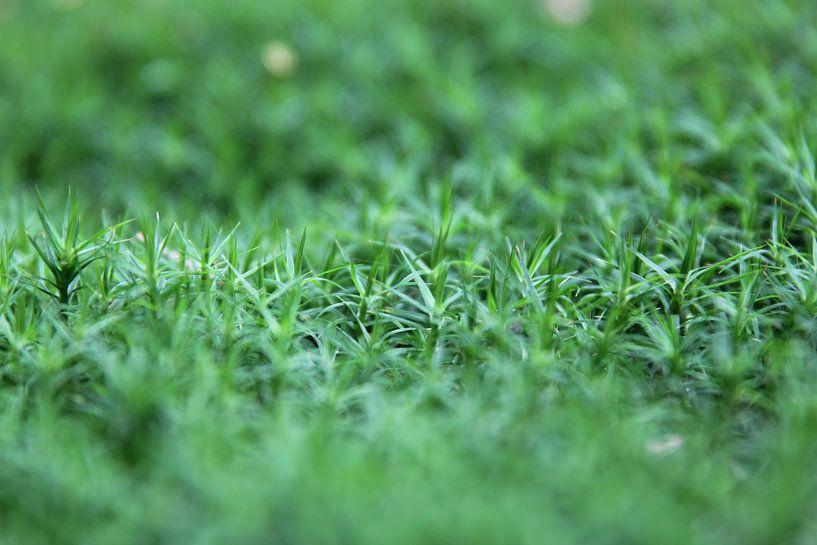 Close-up groene bodembedekking van Sander de Jong