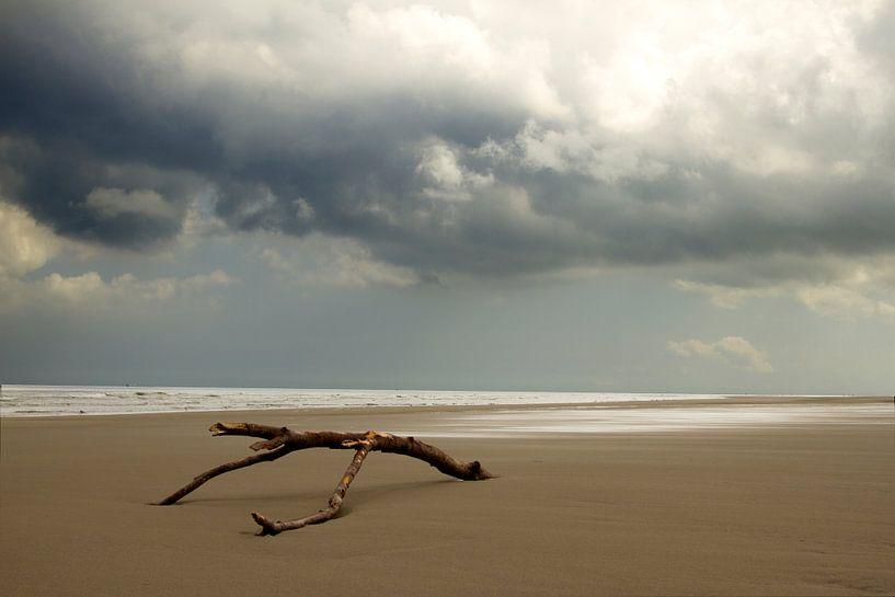 Strandhout op Schiermonnikoog van Karijn   Fine art Natuur en Reis Fotografie