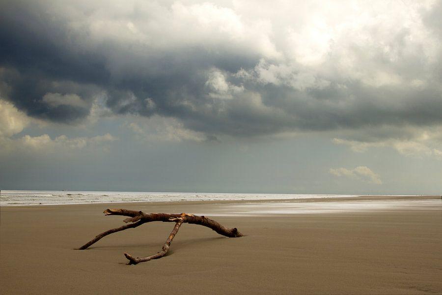 Strandhout op Schiermonnikoog