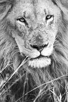 Machtige Leeuw zwart wit van Lotje Hondius
