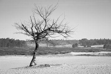 Der einsame Baum von Ron Hermans