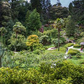 Een  Chinese tuin in Ierland van Rijk van de Kaa