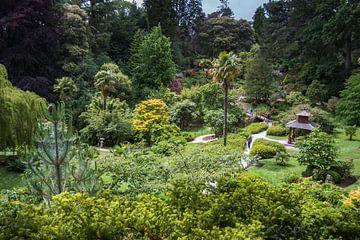 Un jardin chinois en Irlande sur Rijk van de Kaa