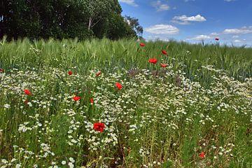 Wildblumen 2 von Edgar Schermaul