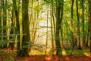 Sonnenschein von Lars van de Goor