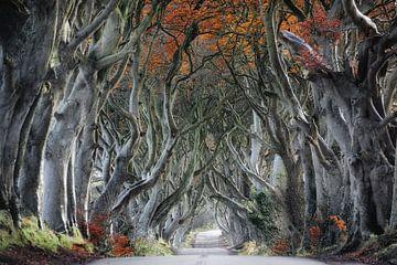 Weg durch den Wald von