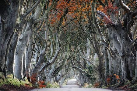 Weg durch den Wald