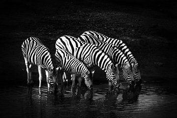 Drinking Zebras van Jan Schuler