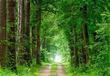 aromatischer Waldweg von Michel Knikker