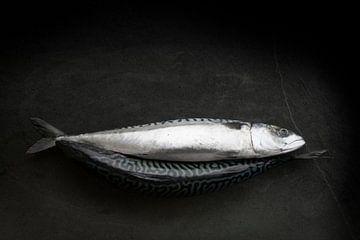 Makreel van Astrid Roozenburg