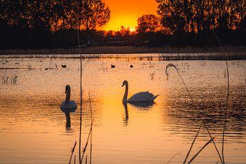 Twee zwanen met zonsondergang van Petra Brouwer