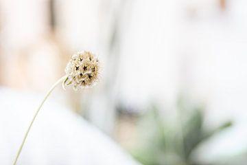 Gedroogde bloem van Danique van Gurp