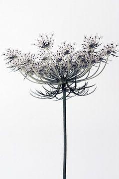 Wortelbloemen (gezien bij de vtwonen) van Martine Affre Eisenlohr
