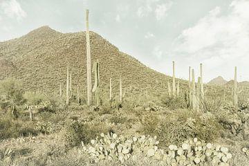 SAGUARO NATIONAAL PARK Reuzengrote Saguaro Cactus | Vintage van Melanie Viola