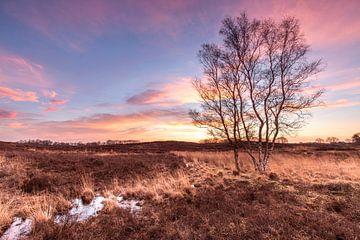 Het Drentse Landschap (De Gasterse Duinen) van P Kuipers