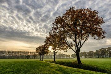 Eikenbomen in het ochtendlicht van