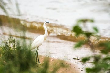 Vogel / Afrikaans landschap / Natuurfotografie / Oeganda van Jikke Patist