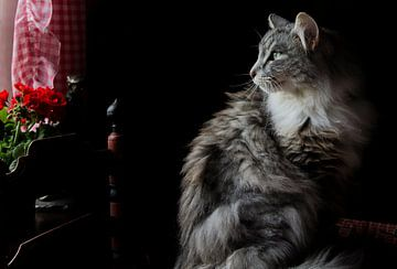 Harige poes in nostalgische kamer van Hollandse watermolen von Sjaak van Etten
