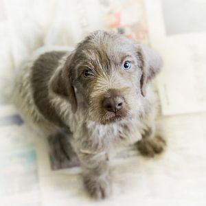 Pup op krant
