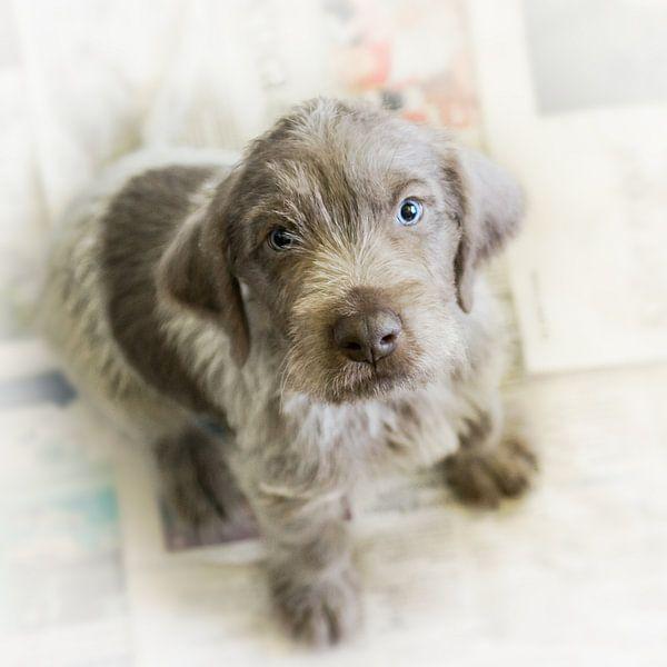 Pup op krant van Mogi Hondenfotografie