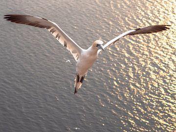 vliegende jan van gent van Henri van Rheenen