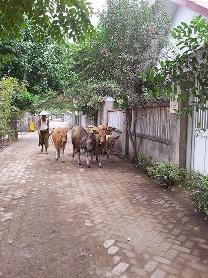 Man met Koeien van Iris Ritzen
