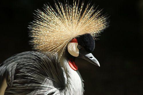 Bird von Paul Hinskens