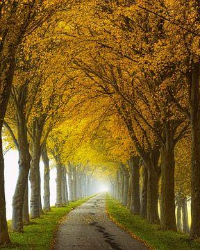 Endlos Straße von Lars van de Goor
