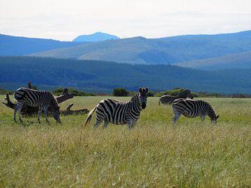 Zebra op Safari van Sanne Bakker