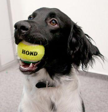Hond van Beer Foto
