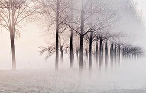 Mist in de Zeeuwse polders van Ellen Driesse