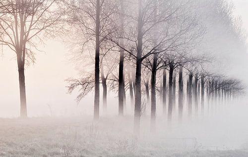 Misty Morning van Ellen Driesse