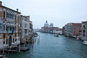 Leven in het water - Venetië van