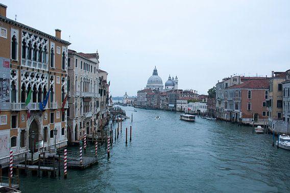 Leven in het water - Venetië
