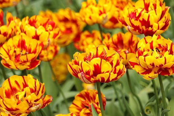 Bloemen die mooi in bloei staan.