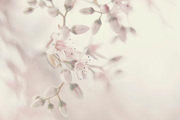 Fruit bloesem in pastel van Ellen Driesse