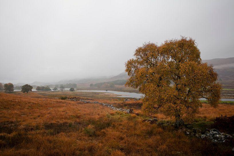 Herfst van Martijn Smeets