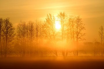 Bäume im Morgennebel van Lars Tuchel