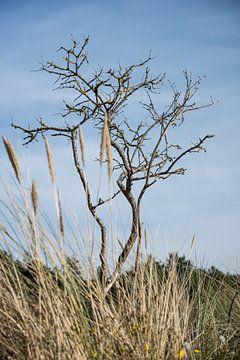 Herfst in de Wassenaarse duinen van Ralph Mbekie