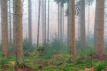 Mistig groen in het bos van