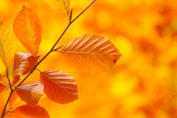 Oranje van Catching Colors