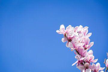 Tulpenboom in het blauw van Hilda Koopmans