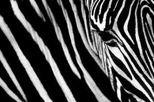 Just stripes van Beitske Kempenaar