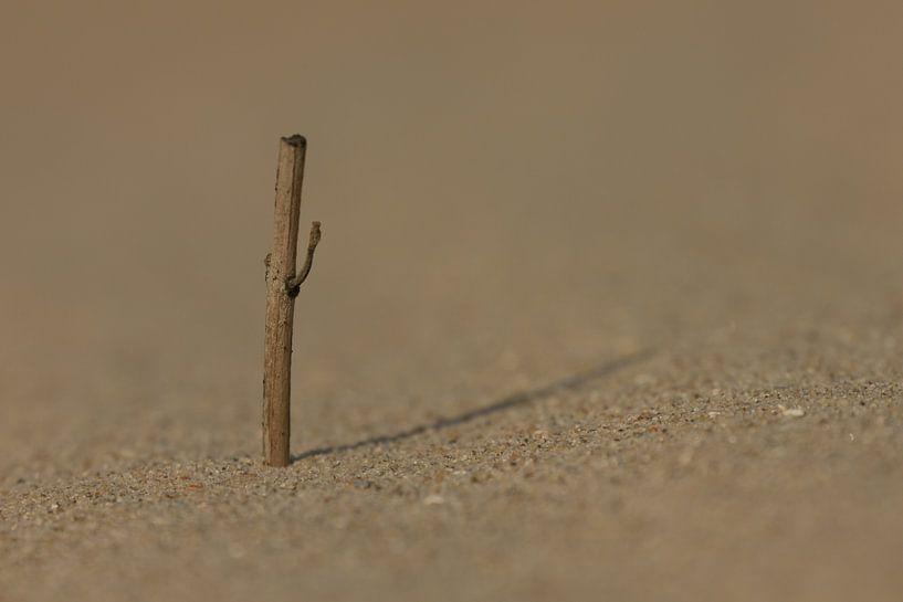 Close-up in het zand van Simone Meijer