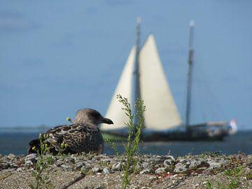 Vogel volgt schip van Janita Bijlsma