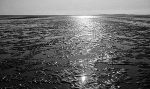 Waddenzee bij Terschelling tegenlicht