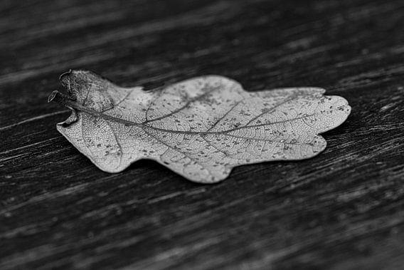 Herfstblad in zwart/wit