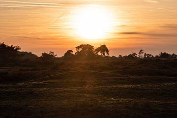 soleil couchant sur le Veluwe sur Tania Perneel