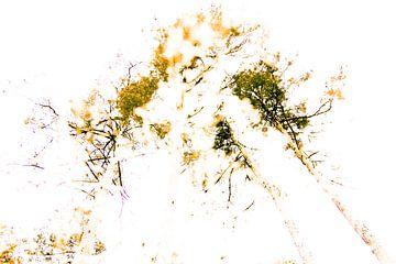 Bomen van Walter Grimm