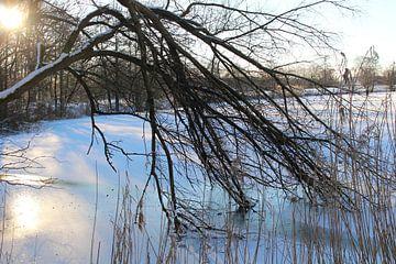 Vastgevroren takken in het ijs van Audrey Nijhof